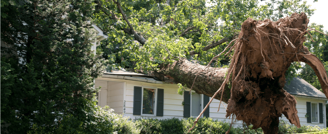 Trees, Neighbors and Insurance Coverage: What You Need to